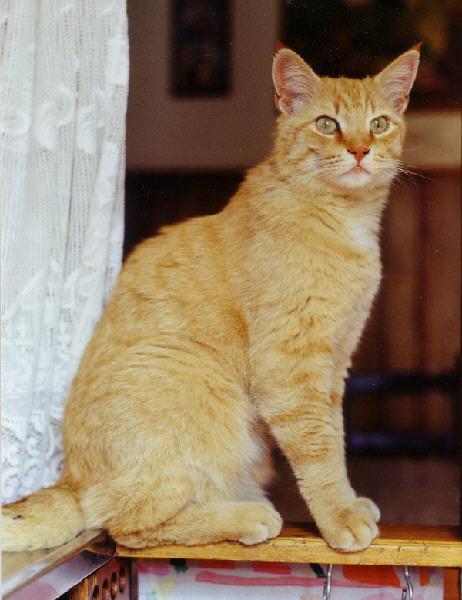 Cétait un beau chat, grand et fière et il savait le faire savoir !